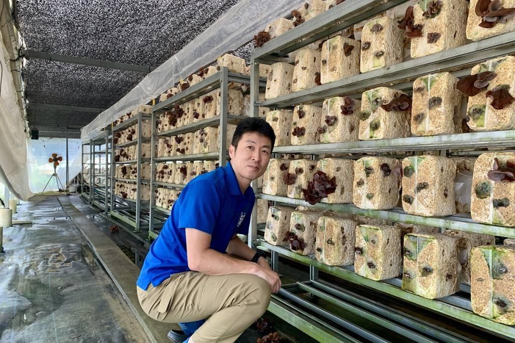 フォレストファーマーズ下切 の生きくらげ栽培